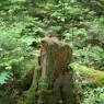 (2007-06) Stumped