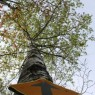 (2008-05) Up Poplar